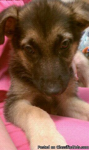 Puppies For Sale Central Florida